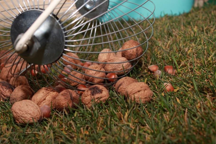 Ролл для сбора ореха, фундука